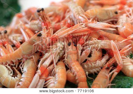 Boiled prawns on La Boqueria Market in Barcelona Spain poster