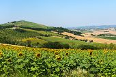 Country landscape between Osimo and Jesi (Ancona Marches italy) at summer poster