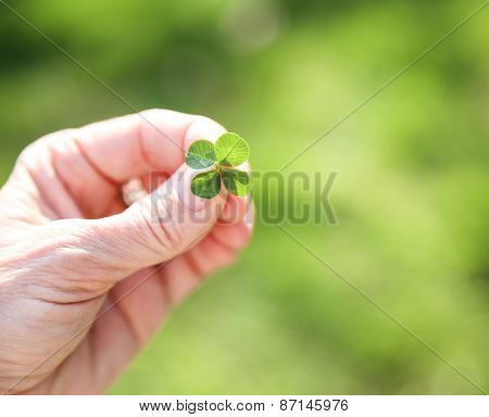 a hand holding a four leaf clover (very shallow depth of field) good for luck or st patrick's day