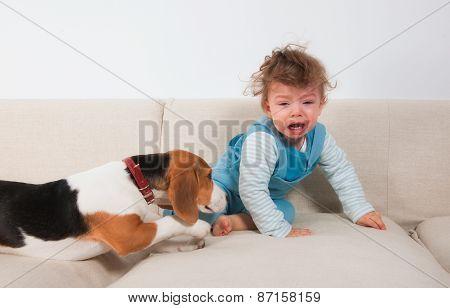 Upset Baby Boy And His Pet
