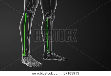 3D Rendered Illustration Of The Fibula Bone
