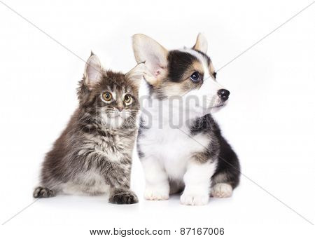 dog and cat,  isolated on white background