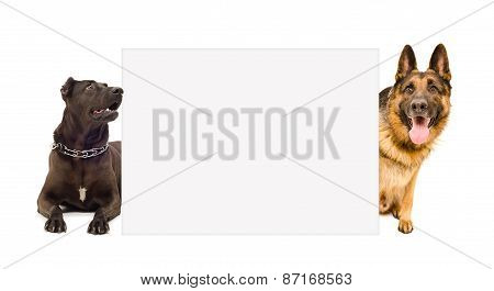 Two dogs peeking from behind poster