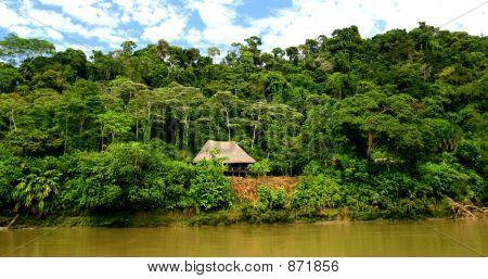 Hut in Rainforest