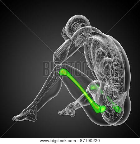 3D Render Medical Illustration Of The Femur Bone -