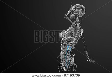 3D Render Medical Illustration Of The Ureter