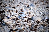 Shells on Gulf Shores beach affected by BP's Deep Water Horizon Oil Spill poster