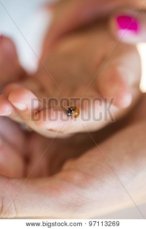 Person Holding A Ladybird On One Finger