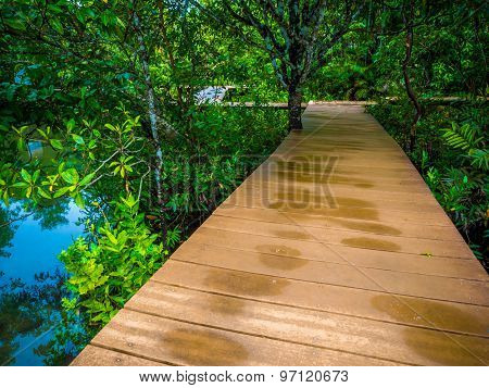 Wooden Pathway In Flooded Rain Forest Jungle