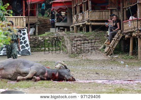 Dead Buffalo Lay On The Floor