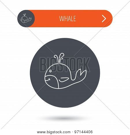 Whale icon. Largest mammal animal sign. Baleen whale with fountain symbol. Gray flat circle button. Orange button with arrow. Vector poster