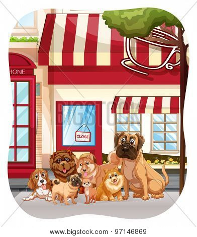 Dogs sitting in front of the coffee shop