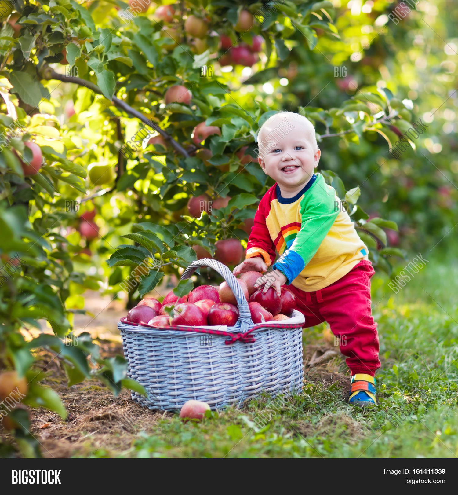 child picking apples image & photo (free trial) | bigstock
