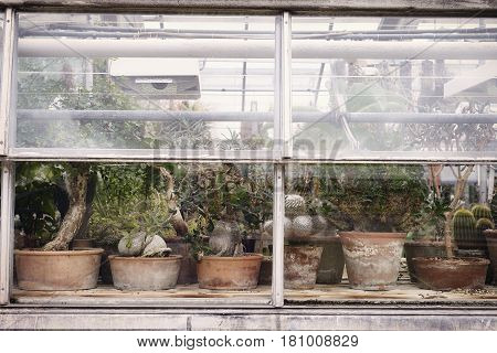 Old pots and Plants in greenhouse of garden