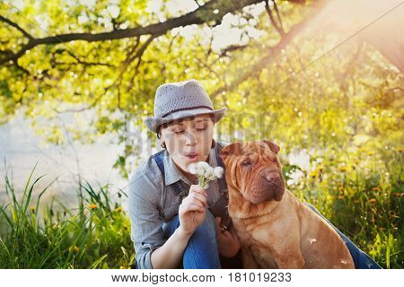 Young woman in denim overalls and hat with red cute dog Shar Pei sitting in the lawn in sunset light and blowing on a dandelion flowers. Best friends forever people pets concept.