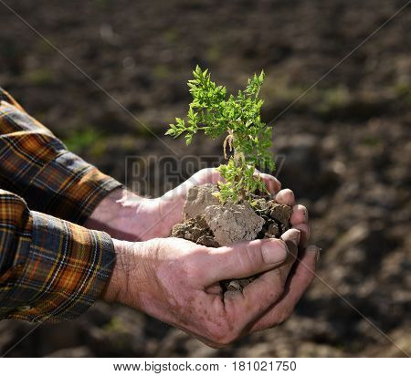 Farmer Holding Green Young Plant