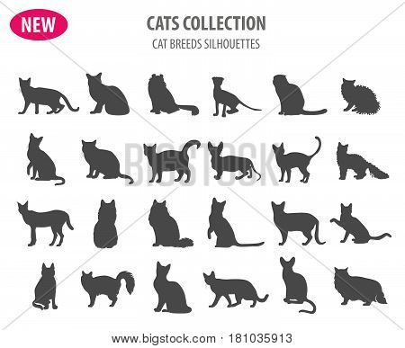 New Collection Dog Hunting_4
