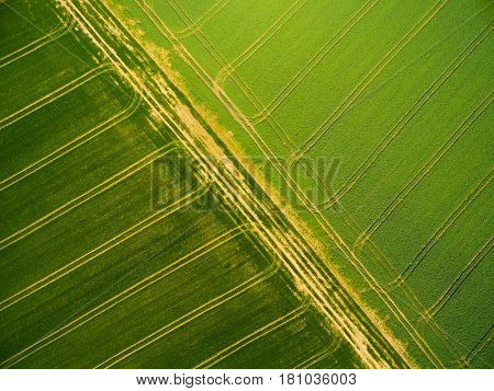 Aerial view to green wheat and rapeseed fields with tractor tracks. Agricultural landscape from above. Countryside scenery as a closeup of green leaf texture.