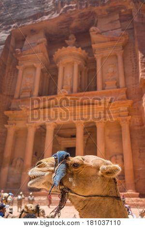 Camel in Petra