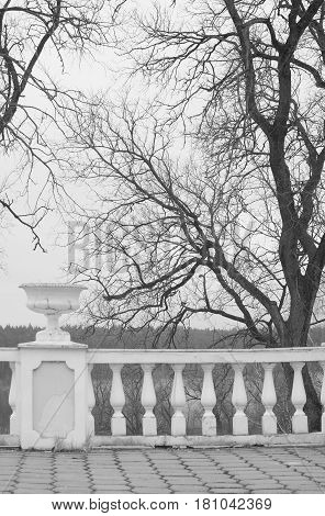 Ancient railings in the park and a tree