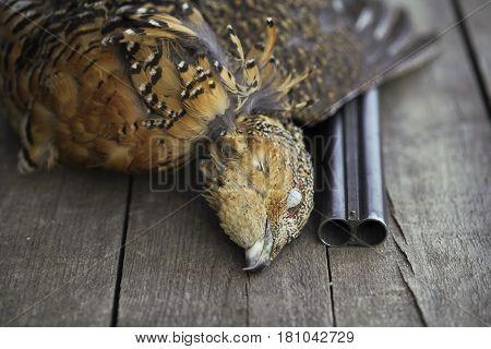 The Gun Killed The Bird Hunters, Prey, Capercaillie