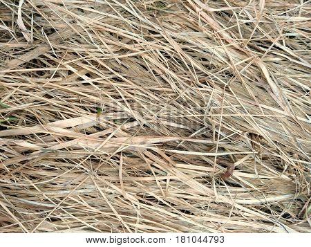 Grassy grass background