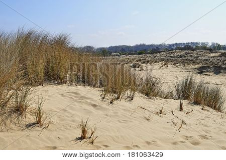 Footprints On The Sand Dunes
