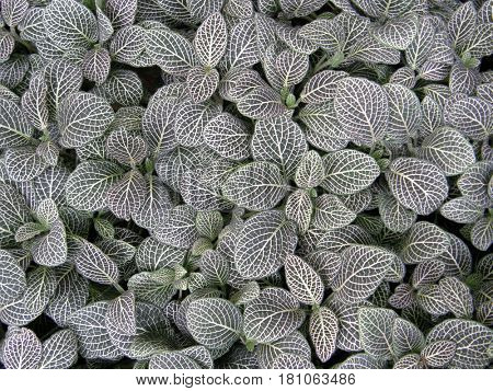 Beautiful homogeneous texture of living plants.