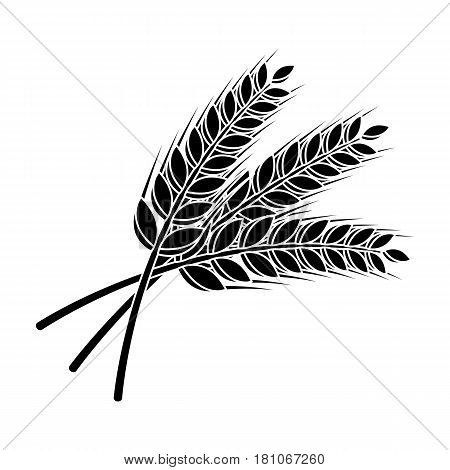 Sprigs of wheat. Plant for brewing beer. Pub single icon in black style vector symbol stock web illustration.