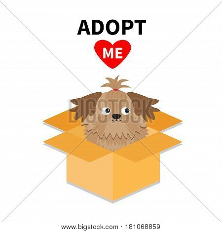 Adopt me. Dont buy. Shih Tzu Dog inside opened cardboard package box. Pet adoption. Puppy pooch red heart. Flat design. Help homeless animal concept. White background. Isolated. Vector