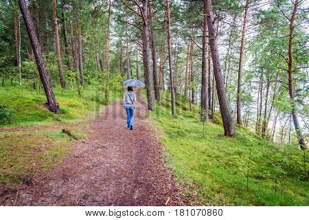 woman with an umbrella walking in a pine forest