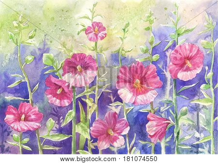Mallow in watercolor suitable for print poster postcard