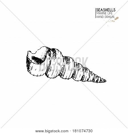Vector hand drawn set of seashells. Isolated starfish. Underwater animal life. Tropical scallop on white. Engraved art. Use for sea restaurant travel brochure decoration.