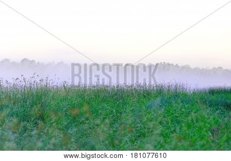 Morning mist over the lake sedge as a background