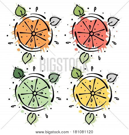 Set Of Vector Illustrations Of Fruits. Lime, Lemon, Grapefruit, Orange, Hand Drawn Contour Lines And
