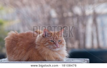 Cat Sitting In The Open Air