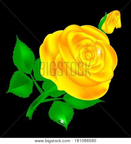 black background and yellow-colored fantasy flower rose