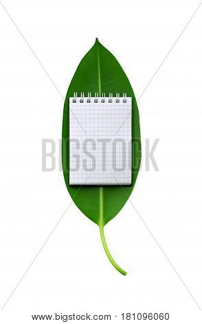 Fresh green ficus leaf with small open notebook on it with blank empty page isolated on white background. Paper with blue graph lines. Top view flat lay. Ecology concept with mock-up.
