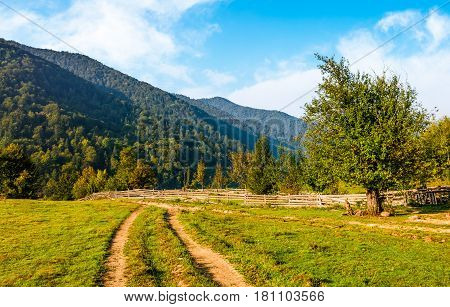 road to fruit orchrd behind the wooden fence on hillside. rural field in mountan landscape. wonderful summer weather with blue sky