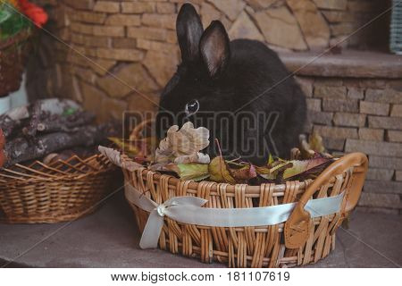 balck rabbit is in the basket. easter