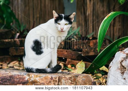 Thai Stray Cat Sitting on a Chair Made from Rock Staring to Something in Kanchanaburi, Thailand