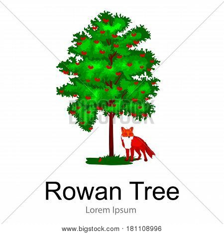 Cartoon isolated rowan summer tree on a white background icon outdoor park with branch, leafs on green grass vector illustration