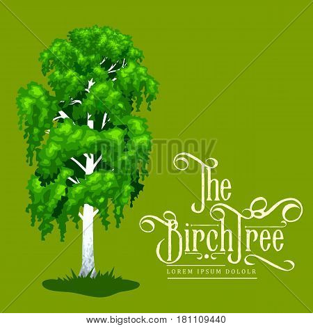 Cartoon isolated birch summer tree on a white background icon outdoor park with branch, leafs on green grass vector illustration