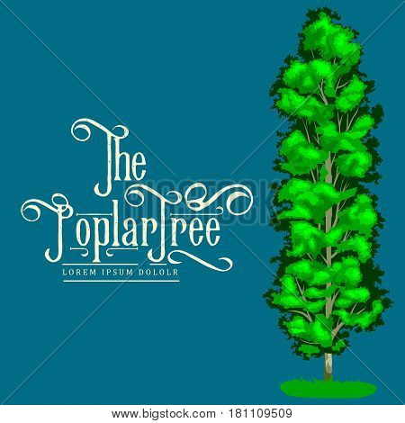 Cartoon isolated poplar summer tree on a white background icon outdoor park with branch, leafs on green grass vector illustration