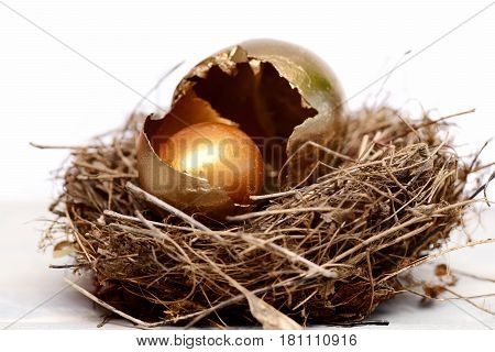 Broken Easter Golden Eggs With Shell In Bird Nest