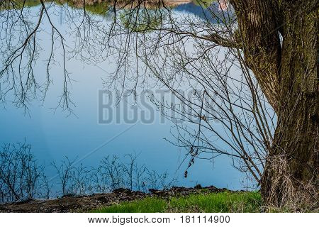 Landscape of large tree next to river with branches and trees from the far shore reflected in the blue water
