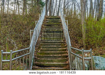 Wooden stairway with chrome railing in woodland park