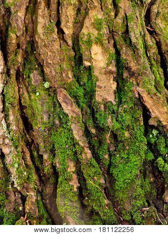 Moss Growing On Tree Bark