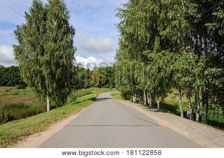 Asphalt road in the country birch trees on roadside sunny summer day