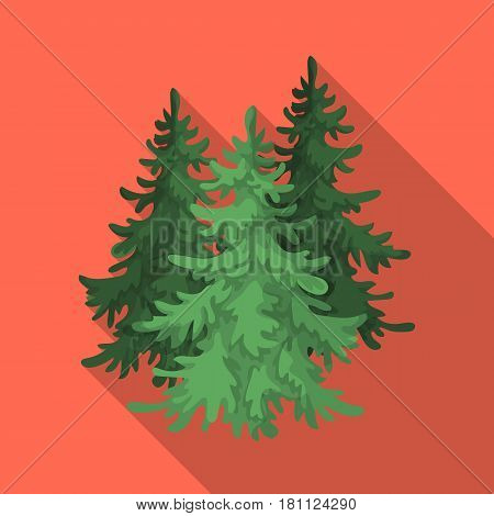 Canadian spruce. Canada single icon in flat style vector symbol stock illustration .